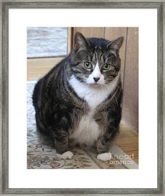 Framed Print featuring the photograph I Am Dieting by Louise Peardon
