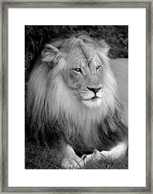 Framed Print featuring the photograph I Am King by Renee Hardison