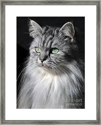 I Am Not Amused Framed Print by Graham Taylor
