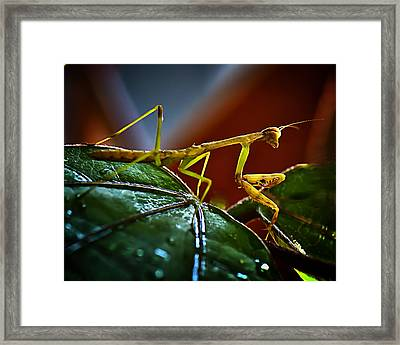 I Am Ready For My Closeup Mister Demille Framed Print by Michael Putnam