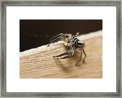 I Am Watching  Framed Print by Leslie Leda