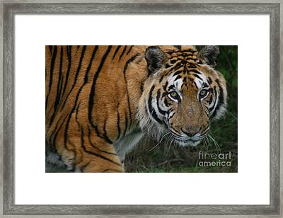 I Am Watching You Framed Print by Carol Wright