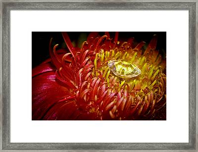 I Bring You Diamonds Framed Print by Ronel Broderick