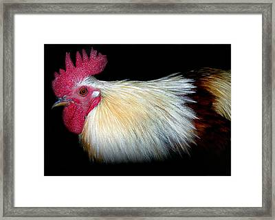 I Came First Framed Print by Skip Willits