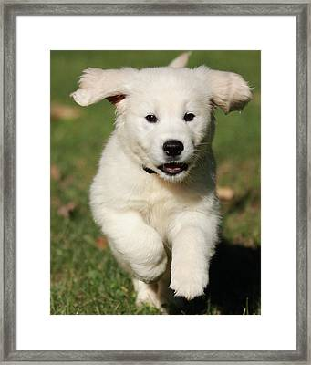 I Can Fly Framed Print by Coby Cooper