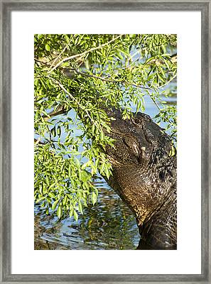 I Can See You Framed Print by Carolyn Marshall