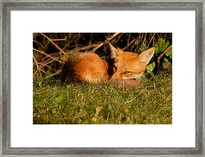I Can See You Framed Print by Mircea Costina Photography