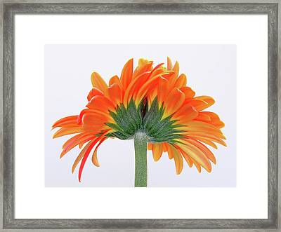 I Cannot Live Without You  Framed Print by Juergen Roth