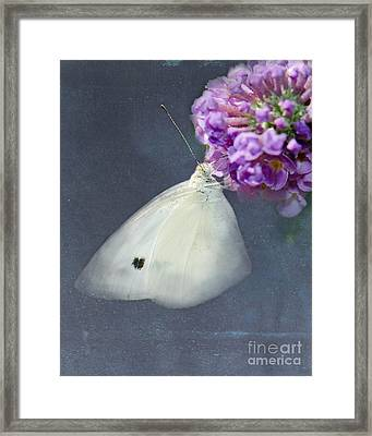 I Dream Of A White Butterfly Framed Print by Betty LaRue