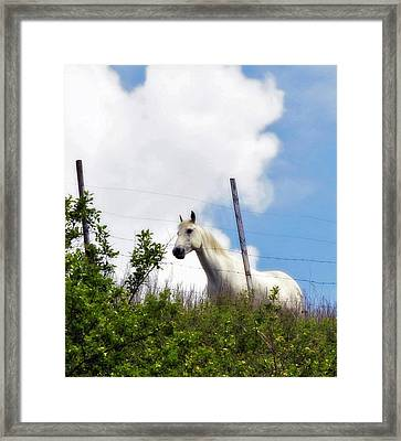 Framed Print featuring the photograph I Dreamt Of A White Horse by Michael Dohnalek