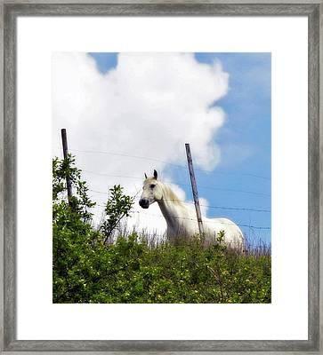 I Dreamt Of A White Horse Framed Print