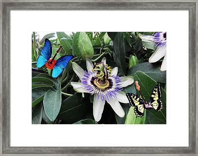 I Feel Love  Framed Print by Eric Kempson