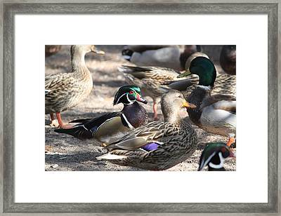 Framed Print featuring the photograph I Found Waldo by Amy Gallagher