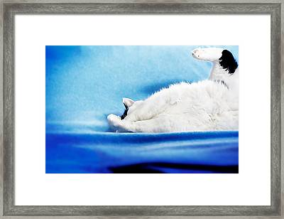 Framed Print featuring the photograph I Have A Question by JM Photography