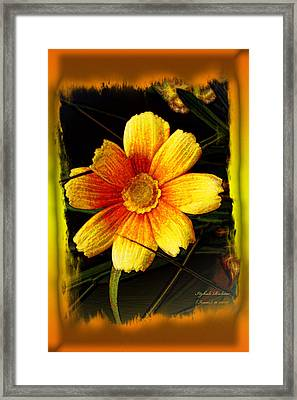 Framed Print featuring the photograph I Have My Eye On You by Itzhak Richter