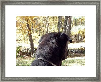 I Hear Something Framed Print by Kim Galluzzo Wozniak