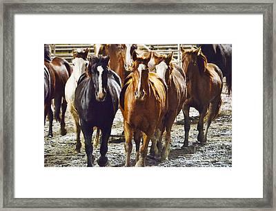 I Herd That Framed Print by Lynda Dawson-Youngclaus