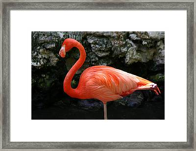 Framed Print featuring the photograph I Know I Look Good by Jeanne Andrews