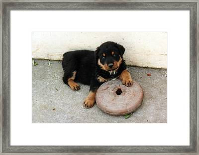 I Lift Weights You Know Framed Print