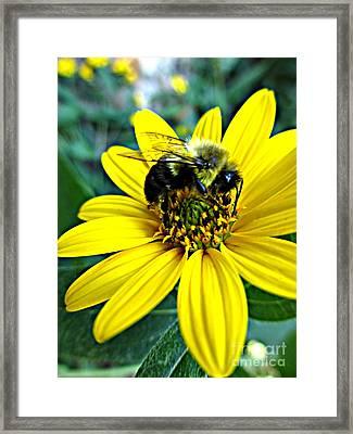 I Love Pollen Framed Print by Maria Scarfone