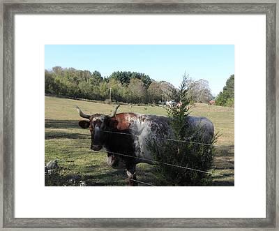 I Rule The Farm Framed Print by Kim Galluzzo Wozniak