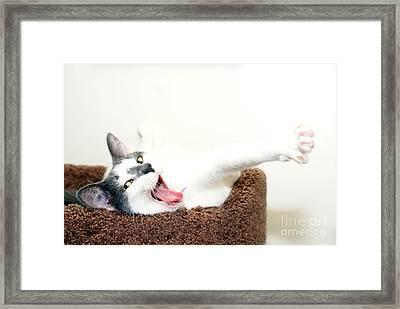 I Said Meow Already Framed Print by Jack Norton