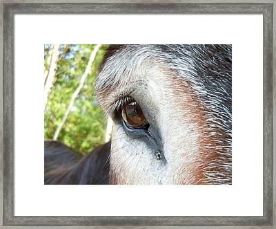 I See You Framed Print by Anne Gordon