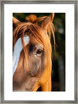 I See You Framed Print by Barbara Shallue