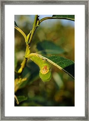 I See You Framed Print by Beth Akerman