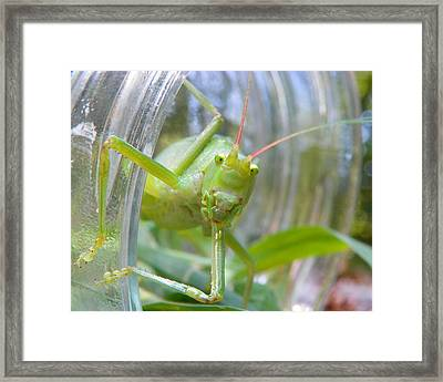 Framed Print featuring the photograph I See You by Chad and Stacey Hall