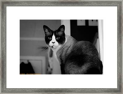 I See You Framed Print by Dan Crosby