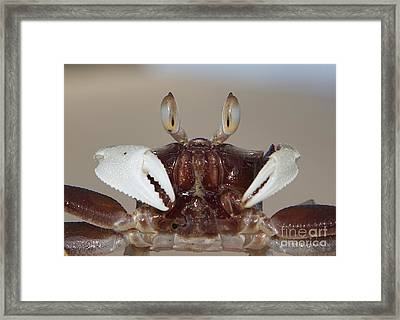 Framed Print featuring the pyrography I See You  by Gary Bridger