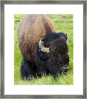 I See You Framed Print by Jon Berghoff