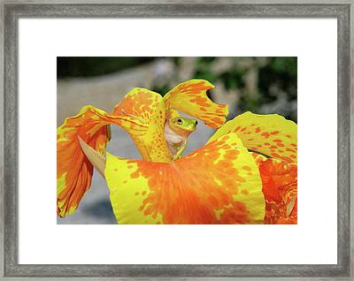 Framed Print featuring the photograph I See You by Kathy Gibbons