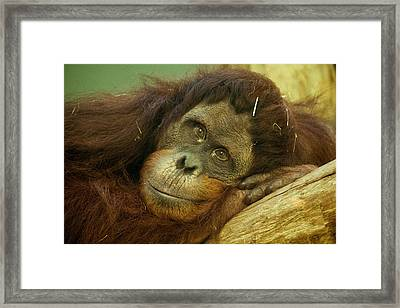 I See You Framed Print by Lindy Spencer