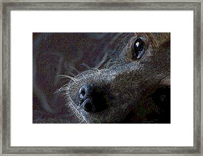 I See You Framed Print by One Rude Dawg Orcutt