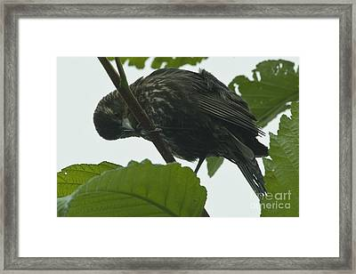 I See You Framed Print by Rod Wiens
