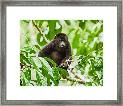 Framed Print featuring the photograph I See You by Susi Stroud