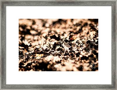 I Shall Imagine Life Framed Print by Venura Herath