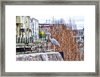 I Should Have Went To Florida Framed Print by Bill Cannon