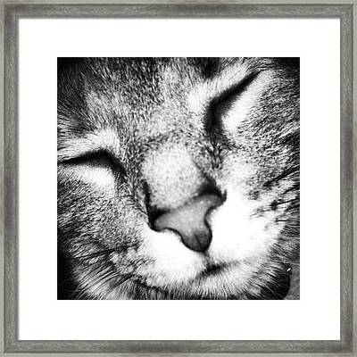 I Spy On My Cat N Take Pictures Framed Print by  Abril Andrade Griffith