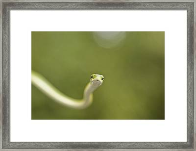 I Ssseee You... Framed Print by David Paul Murray