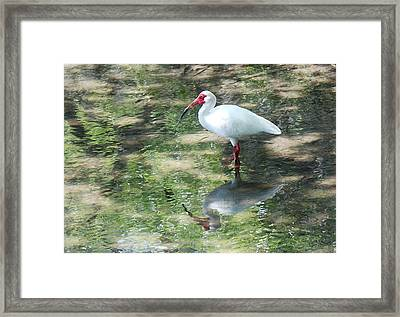 Framed Print featuring the photograph I Stand Alone by Kathy Gibbons
