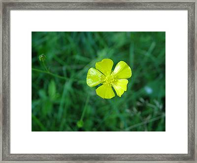 I Stand Out Framed Print by Fredrik Ryden