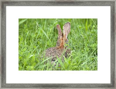 Framed Print featuring the photograph I Still See You by Jeannette Hunt