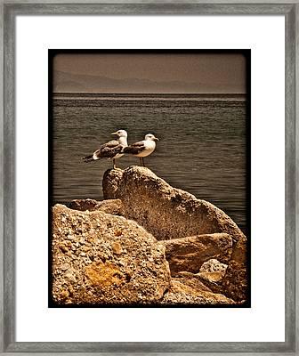 Afitos, Greece - I Think We're Alone ... Framed Print