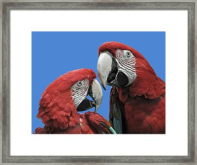 Framed Print featuring the photograph I Told You So by Rodney Campbell