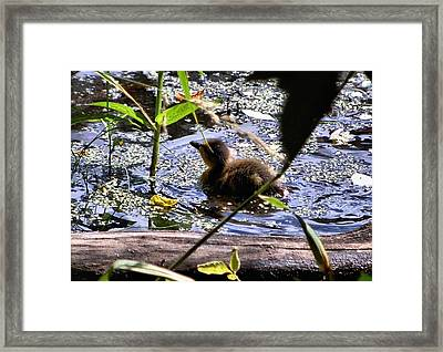 I Wish I Could Fly Framed Print by Don Mann