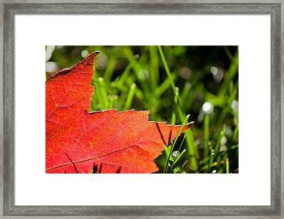 I Wish You Could Stay A While Longer Framed Print by Daniel Chen