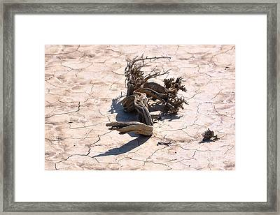 I'am Thirsty Framed Print by Sean McGuire